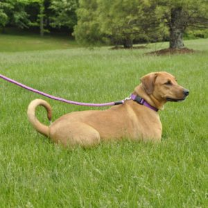 Dog Collar Leash Harness
